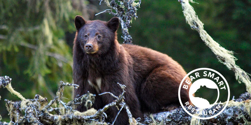 Bear Smart Dining in Whistler - How we can make informed restaurant choices to help keep our bears safe and wild